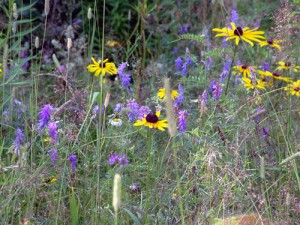 The natural flowers of Maine are everywhere...not alot of people, property...just wildlife, woods, space.