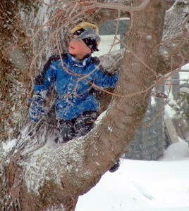 "Ask Any Maine Kid, Do They Like, Enjoy, Play In The Snow? This Is One Happy Kid In One Of The Trees In My Backyard That Would Shout ""Yes""."