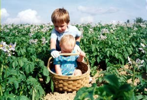 Teaching The Skills Of Potato Picking Early On.