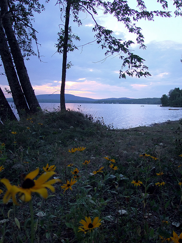 Wild, Very Wild Flowers In Maine Are The Best, Hardiest.