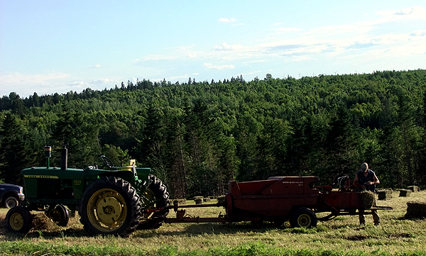 Baling Hay In Maine. Hot Summer Play Time.