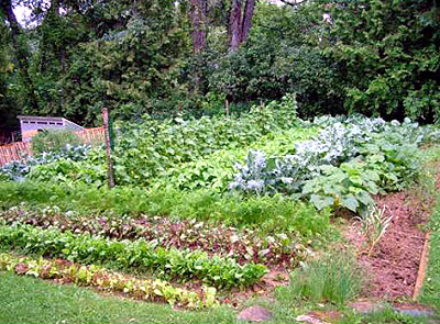 Planting, Weeding, Maine Vegetable Gardening Takes A System, Organization.