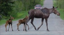 Maine Hunting Season Is Underway, Like School Crossings, Be Careful.