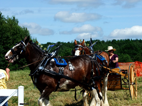 The Rural Country Life Living On A Maine Farm, Raising Horses.