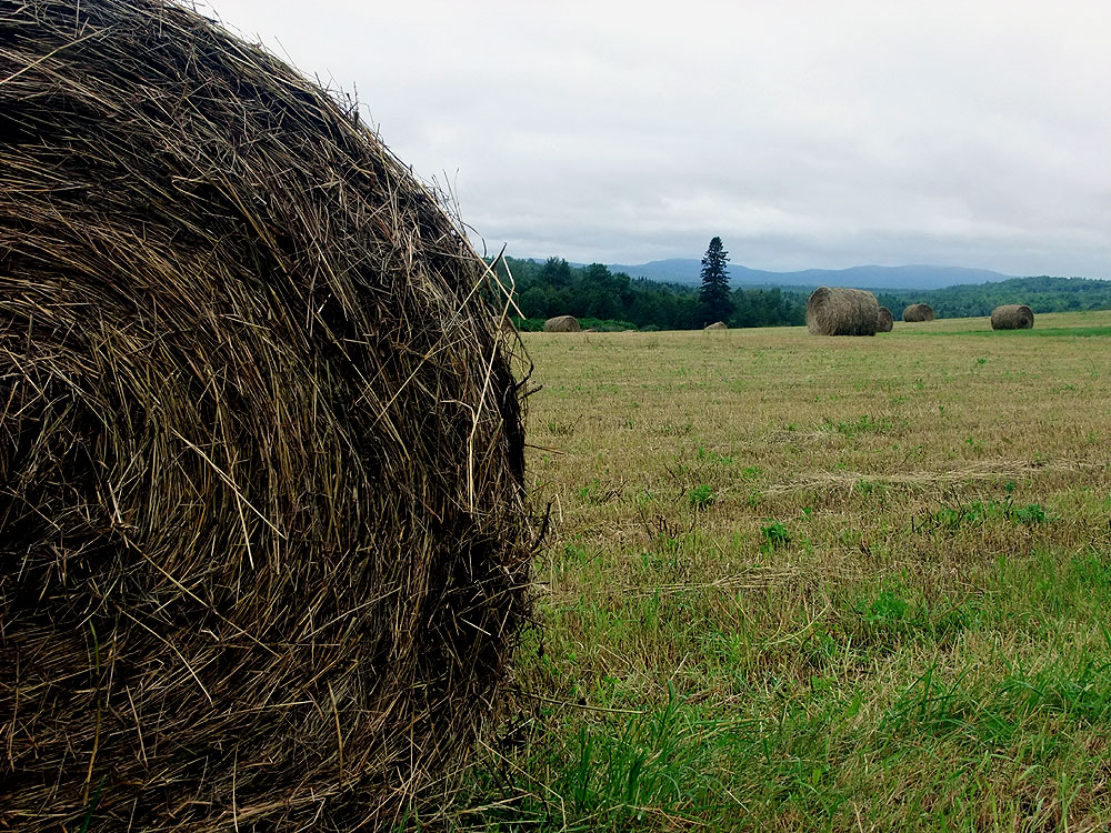 Summer Maine Farm Field Pasture Haying.