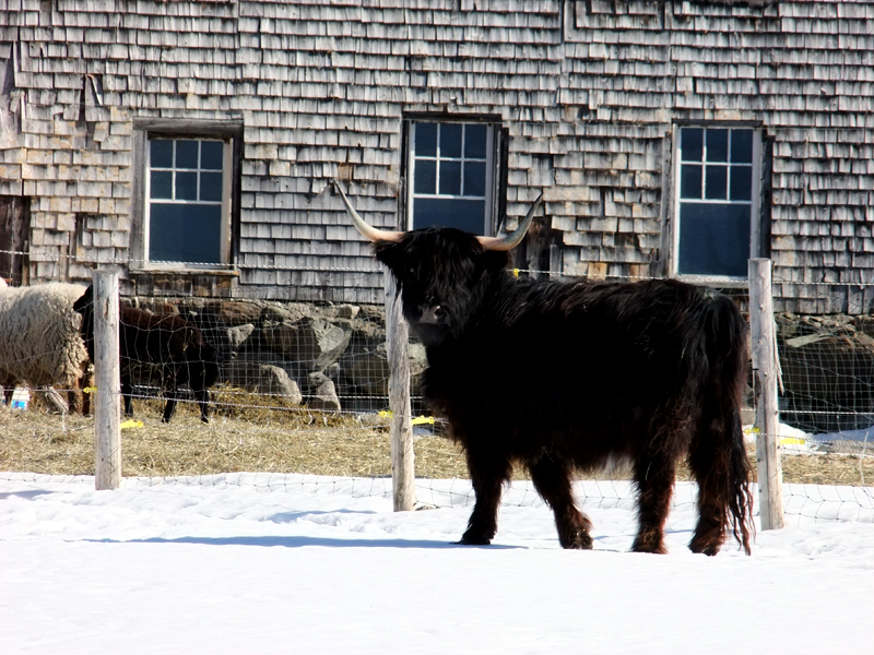 Maine Farm Animals, Land To Raise Crops, Critters.