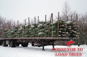 Maine Christmas Trees Heading To Market.