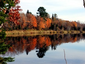 Maine Fall Colors, Mirrored By Still Water.