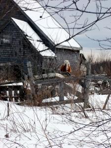 Home Grown, Maine Farm Fresh.
