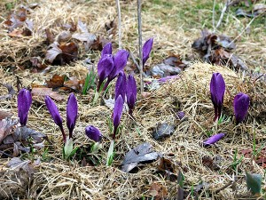 Maine New Spring Flowers.