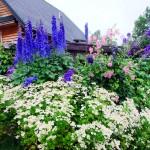 Gardens, Flowers In Maine