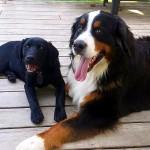 Maine Dogs Bond.