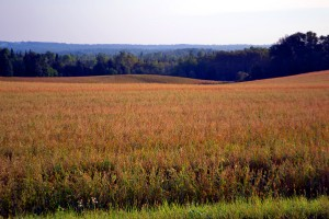 Maine Land Photo