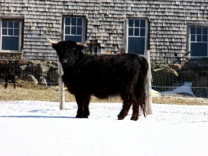 We Are Bullish On Maine. Uplug And Make This Your Outlet To Recharge.
