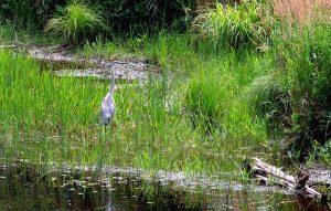 Maine Crane