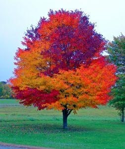 maine fall foliage harvest colors