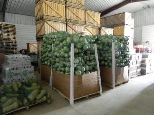 Organic Food In Maine