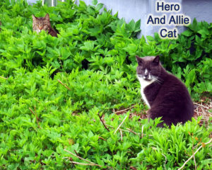 maine lawns cats photo