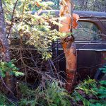 old car in maine woods