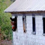 horsing around work ethic