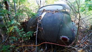old cars parked in the woods photo