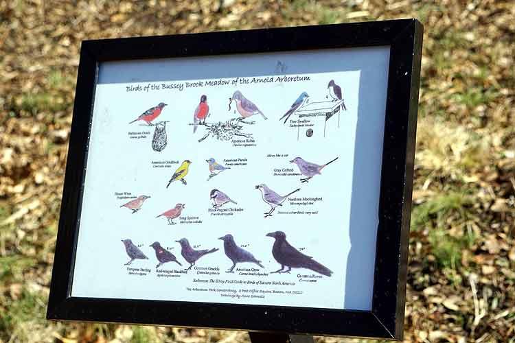 arboretum birds