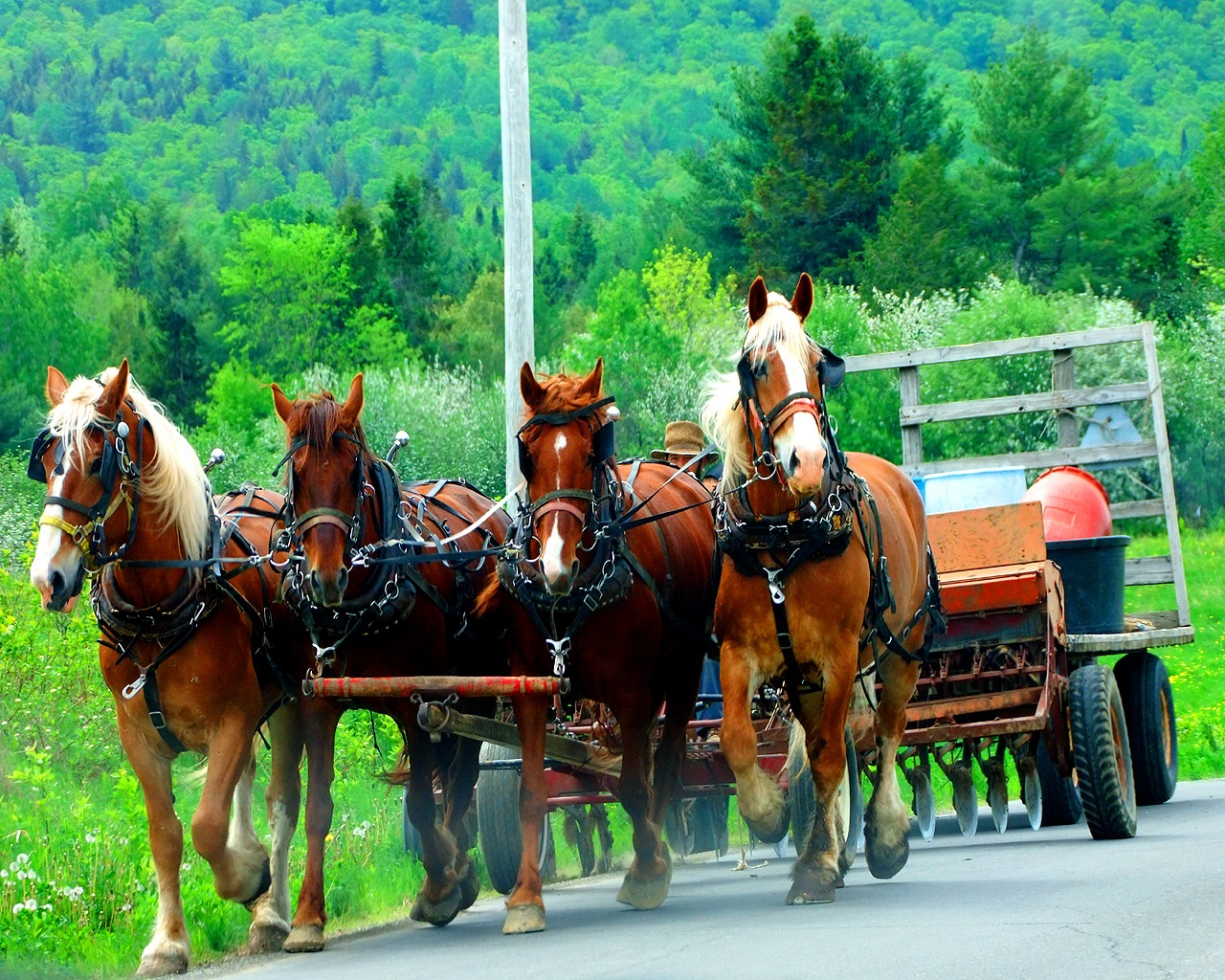 maine farming horses