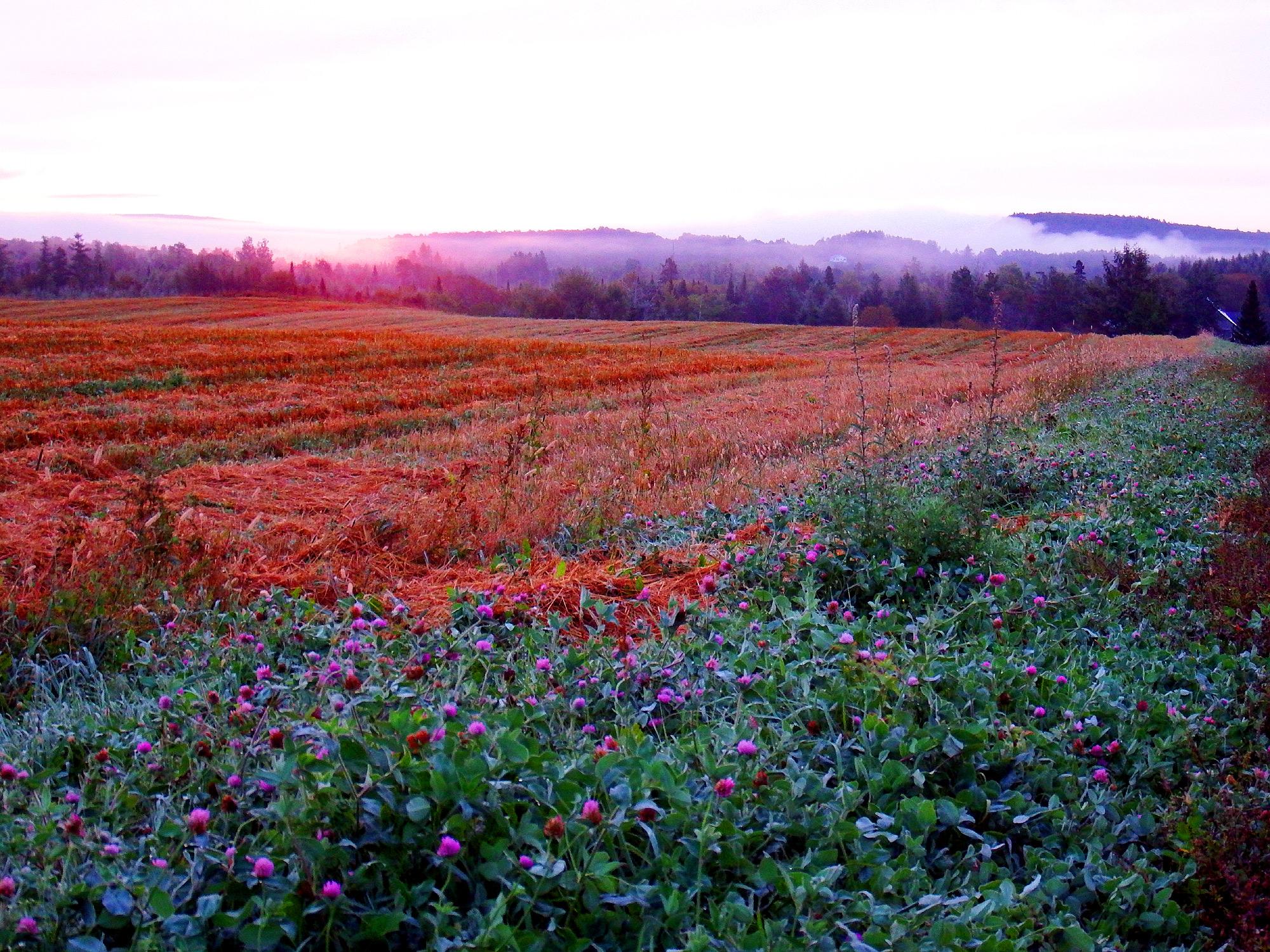 pasture farm fields in maine