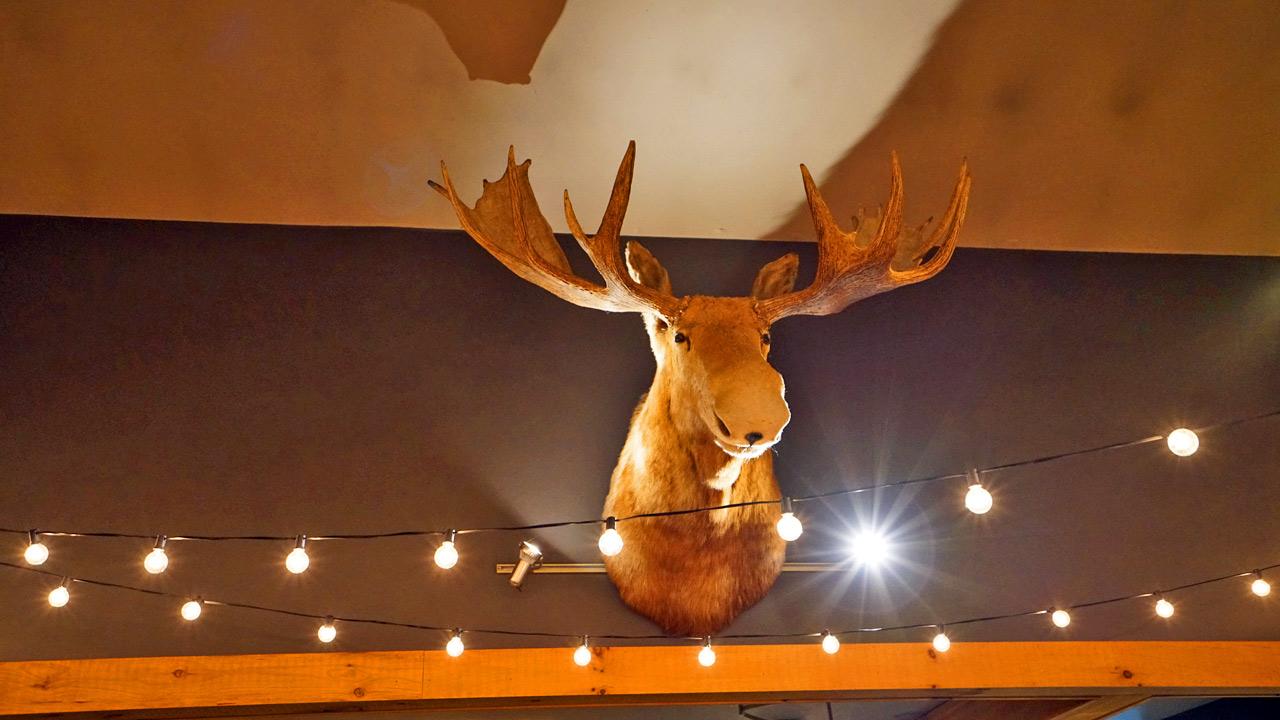 maine moose on wall