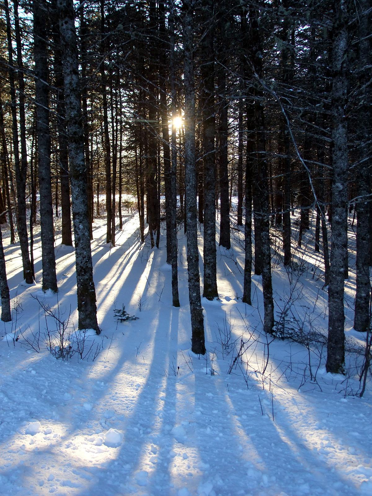 maine woods photo