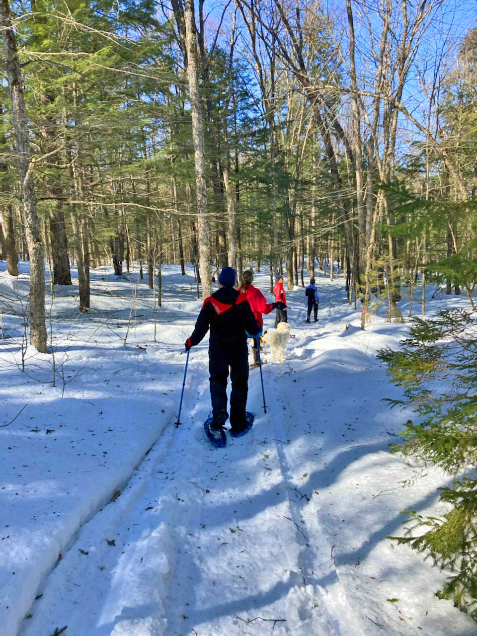 snowshoeing maine trails