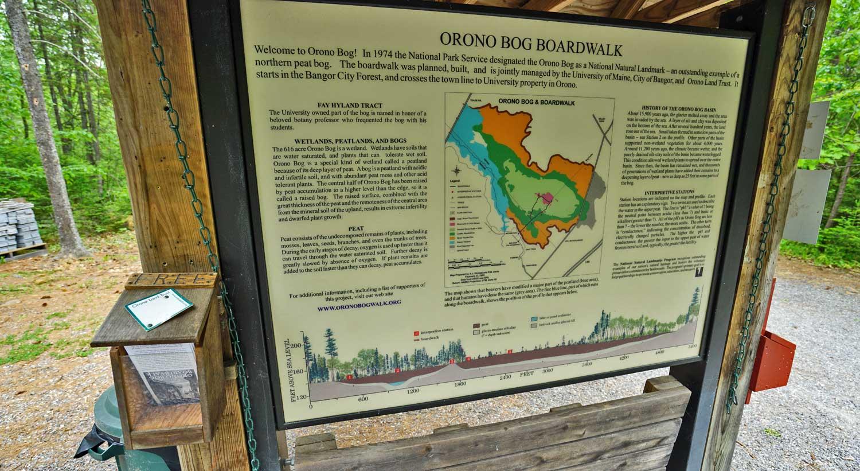 orono bog boardwalk