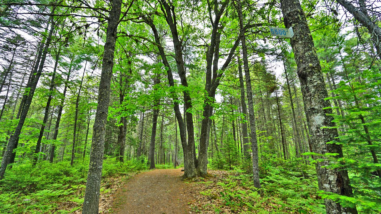 trail hikes in maine