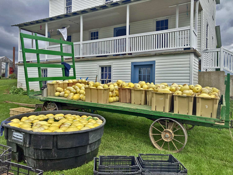 maine amish farm wagons