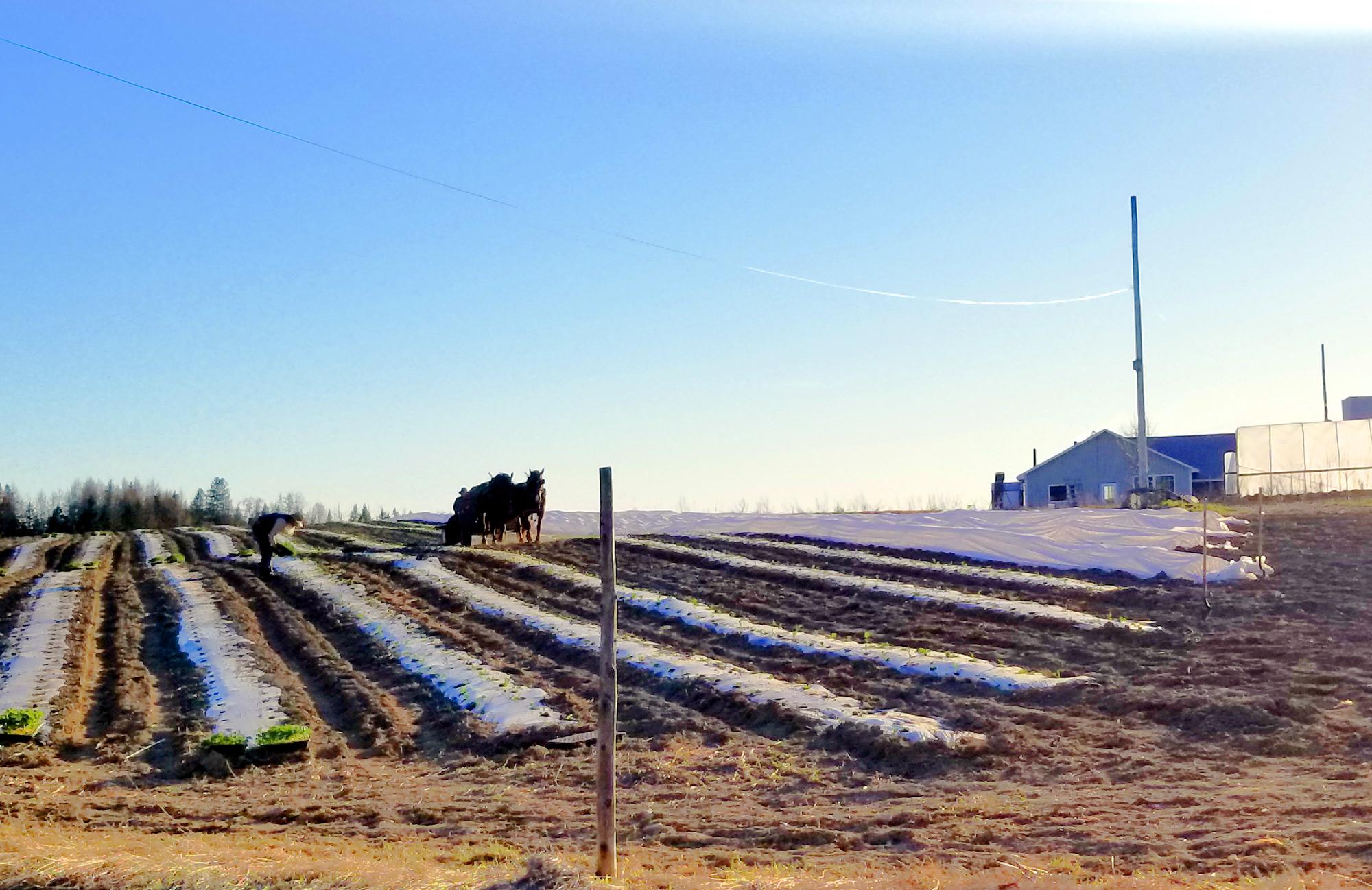 maine amish farm field